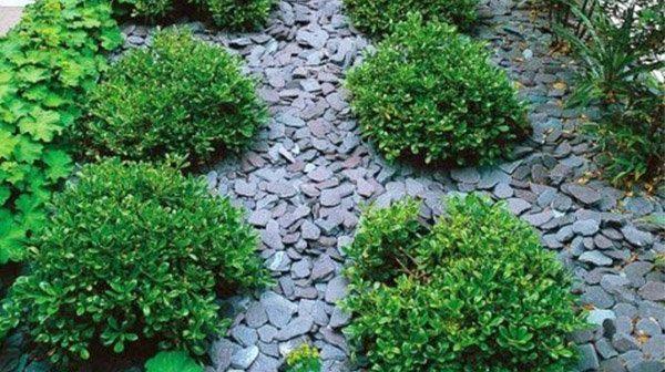 Midland Stone Plum Slate Chippings surrounding green shrubs