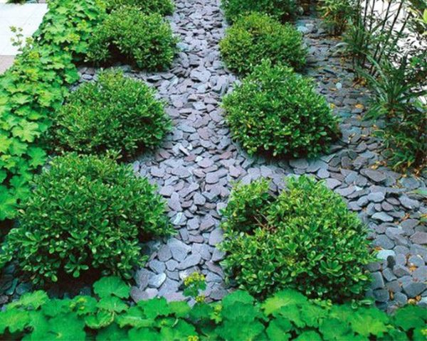 Midland Stone Plum Slate Chippings surrounding green shrubs