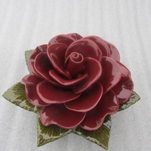 Rose Grena used for grave 20cm